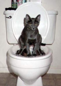 toilet with a cat on it