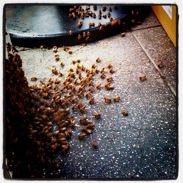 swarm capture DTLA