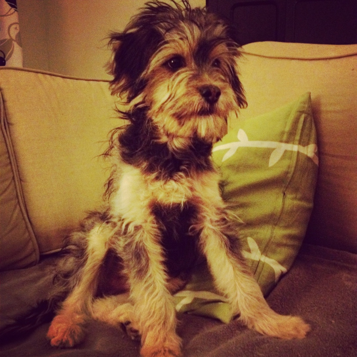arlo the puppy